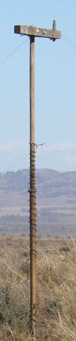Telegraph pole in the Mid North