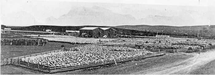 Elder Smith & Co saleyards
